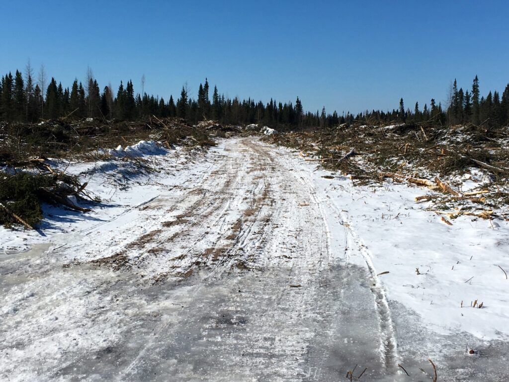 Active logging road ploughed almost bare.